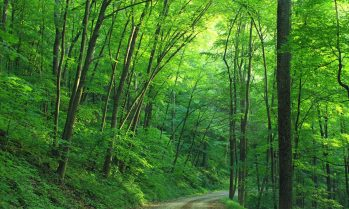 cropped-woods-landscape-road-loyalsock-state-forest-163703.jpeg